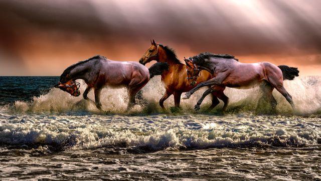 Haplogrupy Słowianie Konie I Koty Rudawebpl